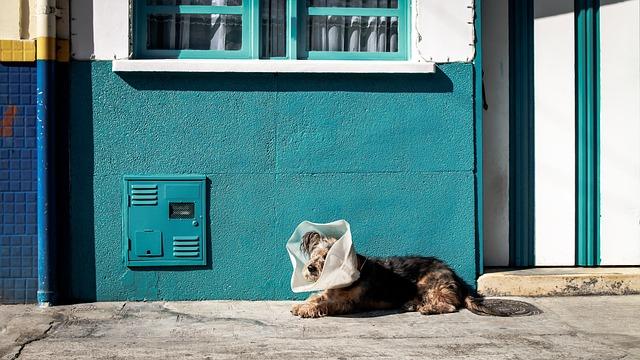 zraněný pes