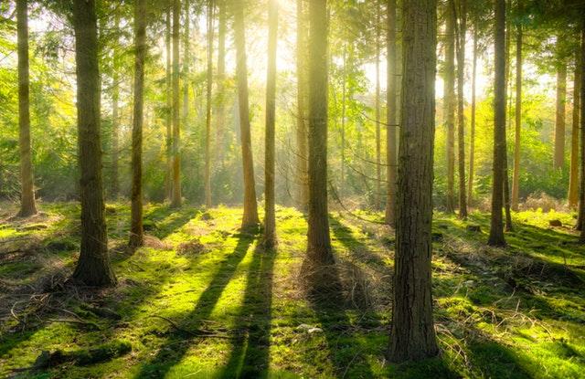 klid v lese